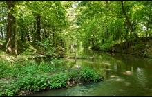 Džungle uprostřed Ostravy