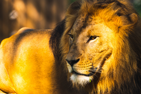 zoo lev benefice